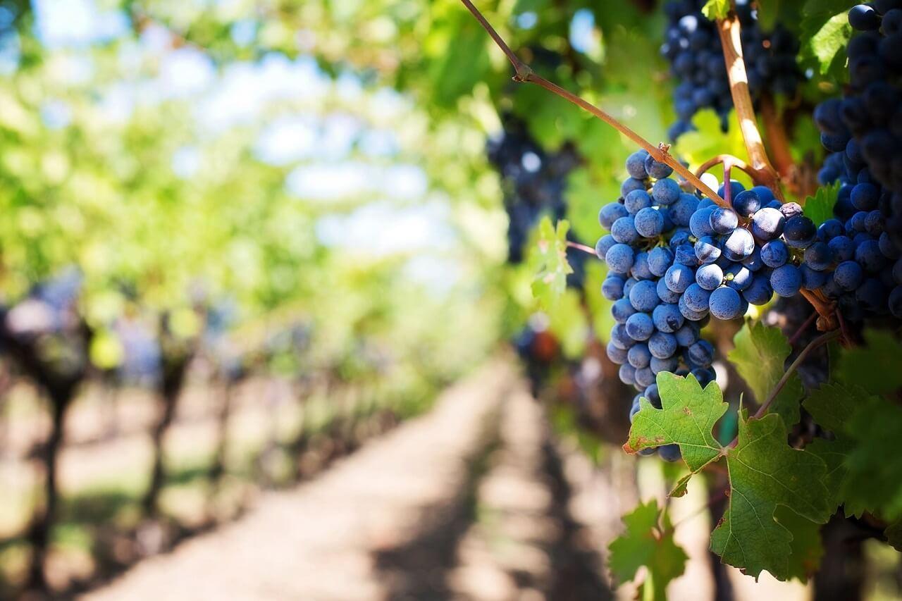 Vino e olio raggiungono l'Asia al Hong Kong International Wine & Spirits Fair